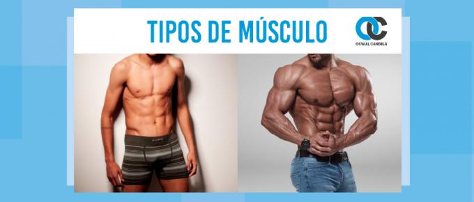 Tipos de fibras musculares ¡Entrena bien!